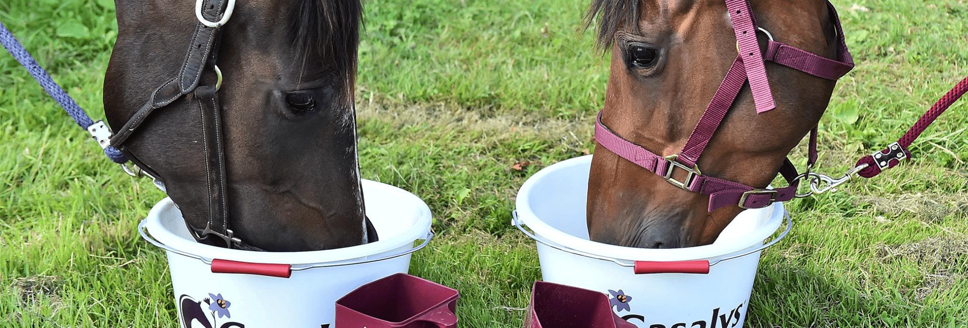chevaux en train de manger