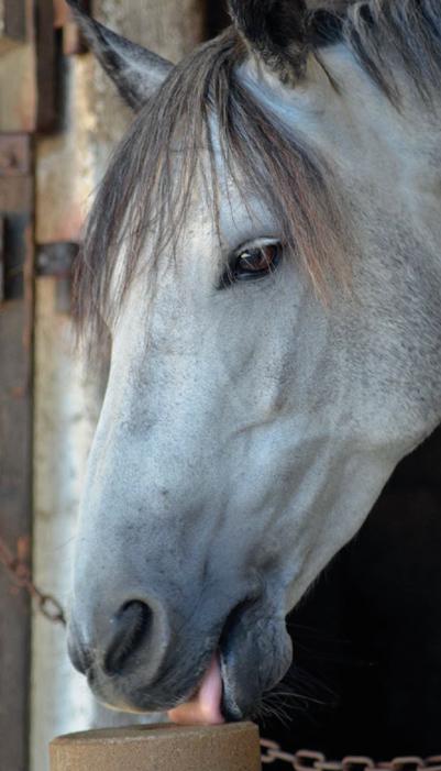Casalys aliment pour cheval